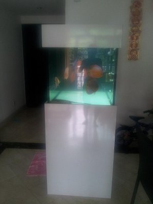 Almost new cheap custom made 4ft cabinet fish tank for for Used fish tanks for sale many sizes